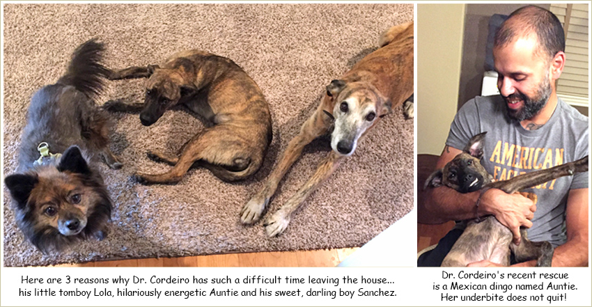 Home pet euthanasia colorado one last gift we have a lifetime to enjoy our dear pets but we will all be faced with this heart wrenching decision eventually the decision to euthanize your pet solutioingenieria Choice Image